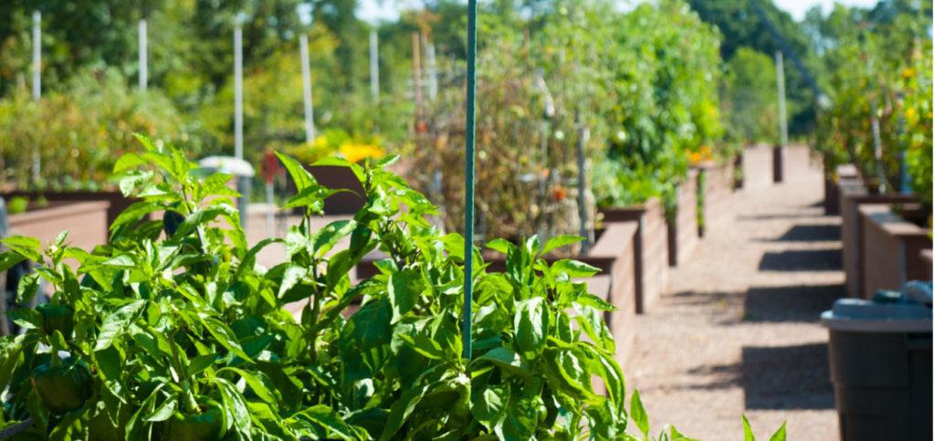 Community Gardening Amenities at Well-Spring
